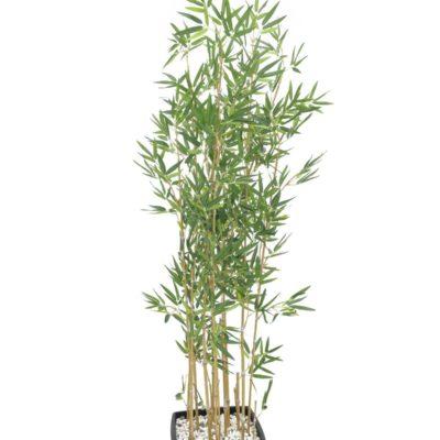EUROPALMS Bamboo in bowl, 150cm